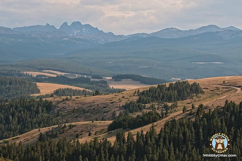IMG 7150 Bighorn Natl Forest WY 800w