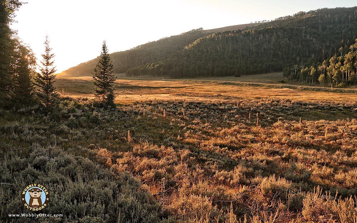 IMG 8098 Flat Canyon CG Manti LaSal Natl Forest Utah 1200w