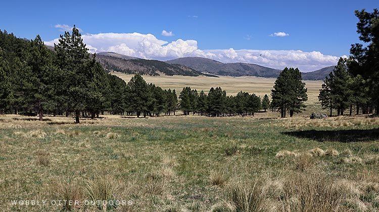 Caldera Meadow